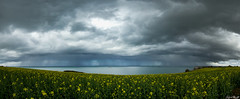 Rainy (NeoNature) Tags: sea sky mer nature field rain weather clouds canon lens landscape angle curtain wide cell pluie grand ciel mm convection nuages temps paysage strom cellule rideau 1022 champ meteorology colza