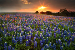 Good night Texas (Oilfighter) Tags: flowers sunset canon dallas spring texas tx houston bluebonnet filter ennis graduated 24105mmf4 5dmarkii leegraduatedfilter