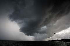 Flight From Danger (DarrynSantich) Tags: storm danger weather extreme nikon d700 bird intense perth