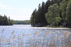 En sakta promenad (auzgos) Tags: skog vatten hus träd sjö vass sommarstuga sakta fotosondag fs120520