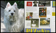 "5/12B ~ ""I'm in a magazine!"" (ellenc995) Tags: magazine riley westie spiderman sensational westhighlandwhiteterrier topgun coth supershot akob abigfave pet500 pet100 thesuperbmasterpiece 100commentgroup coth5 naturallywonderful 12monthsfordogs12 thesunshinegroup sunrays5"