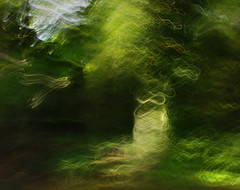 DSC_1083 (lioncourt7) Tags: longexposure trees sunlight lightpainting abstract green forest woods experimental surreal cameratoss lightplay experimentalphotography intentionalcameramovement