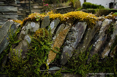 Moss on an Old Stone Fence (Kansas Explorer 3128) Tags: england fern fence moss unitedkingdom grasmereengland lakedistrictnationalparkengland