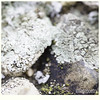 017 (imagepoetry) Tags: detail nature stone garden moss bright a65 imagepoetry