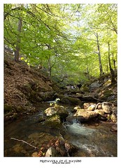 Primavera en el Hayedo (Historia de Covaleda) Tags: espaa spain fiesta paisaje douro pinos soria historia pinar tradicion duero covaleda