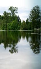 MILL LAKE SEASONS:  SERENE REFLECTIONS ON MILL LAKE, ABBOTSFORD,  BC. (vermillion$baby) Tags: abbotsford bc milllake reflection tree fraservalley canada lake seasons summer green milllakeseasons wetlands