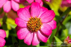 2013_Duke_Gardens_036.jpg (Derrick Shultz) Tags: flowers flickr dukegardens d90 2013 sarahpdukegardens tokina100mmf28macro publishonline