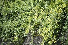 20130719-_DSC7819 (Fomal Haut) Tags: walking nikon  80400mm d4     sanpocamera