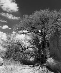 (Scratch Delicado) Tags: mountains newmexico canon landscape desert albuquerque infocus highquality