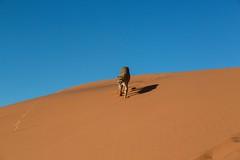 20130616_Namibia_Kiki_at_Dunes_0177.jpg (Bill Popik) Tags: africa kiki mammals namibia cheetahs 2places 3animals africancats