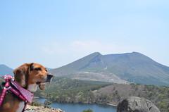 beagle (monroe155) Tags: beagle d7000