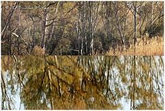 A World In Two (FidoPhoto (John McKeen)) Tags: africa trees water reflections southafrica illusion split johannesburg slipway weir gauteng modderfonteinnaturereserve modderfonteinreserve copyrightjohnmckeen