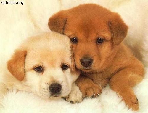 Filhotes de cachorros 79
