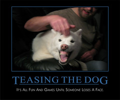 Teasing the Dog Demotivational Poster (BoogaFrito) Tags: husky huskies lexy jonathan uconn connecticut demotivational demotivation poster dog puppy dogs funny cute angry growl snarl teeth white motivational tease teasing snarling growling bite maim