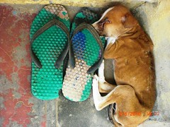 rejected (ponmanachemmal) Tags: puppy rejected chappal