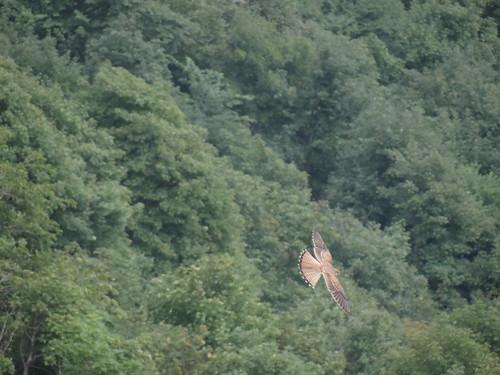 Valkje - Hohneck - Parc Naturel régional des ballons des Vosges {augustus 2013}