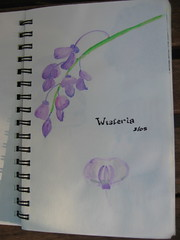 Watercolor - Wisteria IMG_2870 (geoferrier) Tags: original stilllife flower art watercolor branch journal wisteria pencilsketch coloredpencil
