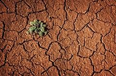 Desert Life (Alan Amati) Tags: life arizona usa plant southwest west america canon utah us ut floor desert dry az dirt american western sw cracks cling clinging goldencircle grandcircle amati desertlife 5dmarkiii alanamati