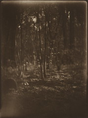 (NooFZz) Tags: bw landscape 9x12 gomz photographicpaper paperpositive bulldog4x5