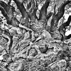Tree of life #familyouting #jestergraphix #familytime #disney #treeoflife #family #florida #disneycruise #bnw #blackandwhite #b&w (jestergraphix) Tags: ifttt instagram tree life familyouting jestergraphix familytime disney treeoflife family florida disneycruise bnw blackandwhite bw