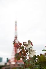 Rabbit and Tokyo Tower (mensore) Tags:  rabbit   tokyotower   tokyo tower landscape 100tokyo cooljapan