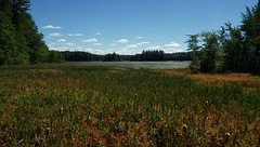 Summer Drought, Early Fall - IMGP6353 (catchesthelight) Tags: nhfallautumncolorsfallfoliagegrassesmarshkimballpondconcord nh
