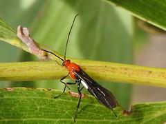flying insects (jeaniephelan) Tags: insects insect flyinginsect