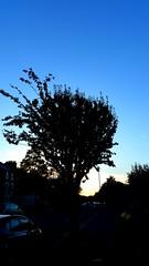 The end of the day (elainedavis189) Tags: sky autumnsky trees nature sunsetphotography sunset samsungphotography amateurphotography flickr explore london landscapephotography landscape samsunggalaxynote4 photography shadow photooftheday city