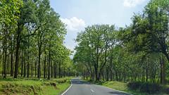 Highway Through Mudumalai (code_martial) Tags: d3300 1685mmf3556gvr roadtrip ooty2016 mudumalai shotbynazia