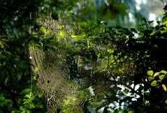 ~spider web in light~ (~~ASIF~~) Tags: canon60d outdoor spider web light