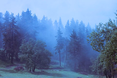 melancholy (Coughh Syrup) Tags: trees mist mountain forest nature blue green organic melancholy nostalgia loneliness landscape soft