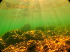(Zatanen) Tags: mediterranean fish pesci kala poisson fisk underwater mare sea meri crete greece snorkeling dive sunbeam