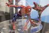 1030_kaiSp-2 (とほ。) Tags: 海洋堂 kaiyodo スパイダーマン リボルテック spiderman revoltech 秋葉原ラジオ会館 トイ 玩具 ホビー 模型 フィギュア アクションフィギュア 趣味 おもちゃ toy hobby model figure actionfigure
