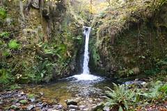 cascada (missemeyas) Tags: cascada otoo bosque puentes musgo nikon d3200 asturias agua humedad setas colores