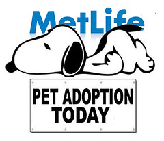 Snoopy Is a Shelter Dog, after C. M. Schulz (Mike Licht, NotionsCapital.com) Tags: metlife snoopy peanuts satire charlesschulz icons corporatebranding petadoption dogs cartoons corporateimages