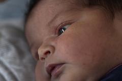 elle est mienne, notre moiti, mais elle (Horace T) Tags: canon eos60d ef100mm newborn baby nouveaun bb portrait