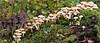 Mushroom Village (Foto Martien) Tags: mushroom toadstool fungi paddenstoel groepjepaddestoelen paddenstoeltjes schimmels cogumelo hongos treetrunk stump fallentree rottingtrunk boomstam boomstronk stronk rottendeboomstam omgewaaideboom groupofmushrooms groepjepaddenstoelen autumn fall herfst najaar seta parasite parasiet parasit park immerloopark immerlooplas immerloo duifje arnhem arnhemzuid betuwe gelderland nederland holland netherlands dutch sonyilca77m2 sonyalpha77mark2 sonyalpha77ii a77 sonyilca77markii macro macrophoto macrofoto minoltamacro100mm28mm macroopname martienuiterweerd fotomartien