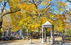 Fall foliage in Tompkins Square (Goggla) Tags: nyc new york manhattan east village tompkins square park fall autumn foliage leaves temperance fountain american elm tree goglog 2016