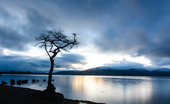 Milarrohy Bay (murphy197) Tags: anneflaherty longexposure scotland snow scenic blue nikond7100 tokina1116mm lochlomond tree lonetree sky loch