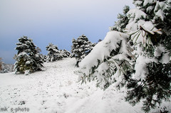 Fischbeker Heide im Schnee- (iltis-aura) Tags: fischbekerheide fischbekerheideimschnee hamburgssden nikond7000 schneeimnovember wald mksphoto sigma1750mm