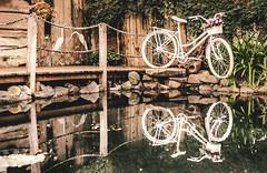 Reflexes (Danilo. G.) Tags: reflexes bike bicycle bicicleta lago lake