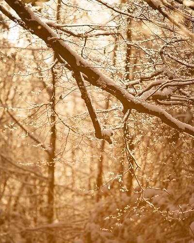 #kalt #winter #schnee  #snow #baum