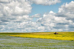 'What snow does - in summer' (Canadapt) Tags: clouds field farm flowers tractor triangles timmins canadapt