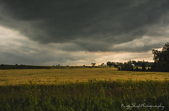 Storm's a Brewin' (Peggy Skof) Tags: nikond5200 ottawa storm country field canada ontario sky bigsky ominous