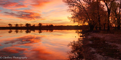 "The Red ""Hour"" (OJeffrey Photography) Tags: clouds reflection sunrise red yellow brilliant silhouette cottonwoodtree trees ojeffreyphotography ojeffrey jeffowens nikon d800 panorama pano colorado co golden"