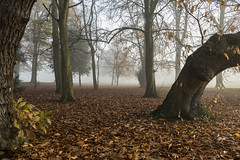 Autumnal and Foggy... (Spokenwheelphotography) Tags: birkenhead birkenheadpark wirral cheshire autumn autumnal fall leaves trees tree nature naturalworld naturephotography fuji fujifilm xt2 1855 weather fog colourful colour colors countryside liverpoolecho wirralglobe wirralnews