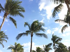 Palmen (maltehempel_de) Tags: usa amerika florida miami beach baywatch dlrg rettungsstaffel wassre schwimmen