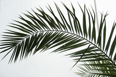 Palm Frond (Sue_Hutton) Tags: asilah maroc morocco november2016 autumn northernmorocco