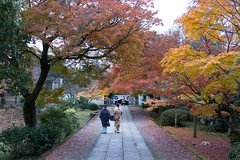 Autumn in dusk blue (k n u l p) Tags: autumn dusk blue maple tree kyoto yogenin temple japan sony nex7 sel1670z 1670mm