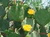 """BSR Cactus and Flower • <a style=""""font-size:0.8em;"""" href=""""http://www.flickr.com/photos/77680067@N06/6926791994/"""" target=""""_blank"""">View on Flickr</a>"""